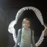 Więcej o: Wizyta w Akwarium Gdyńskim